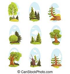 球果を結ぶ, 自然, カラフルである, set., 木, 落葉性, ベクトル, 様々, イラスト, 風景