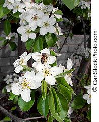 球根の花, 蜂