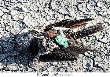 環境, disaster., 世界的である