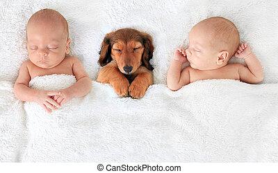 生まれたての赤ん坊, 子犬