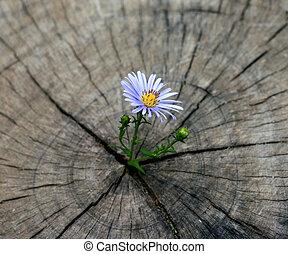 生まれる, 花, 切り株