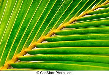 生動, 棕櫚葉