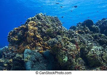 生存珊瑚, 礁石
