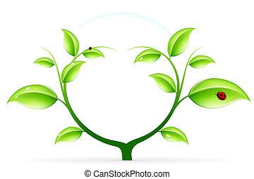 生態學, 綠色