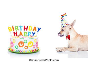 生日, 狗, 愉快