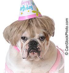 生日, 狗