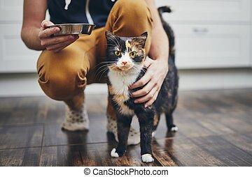 生活, 国内 猫