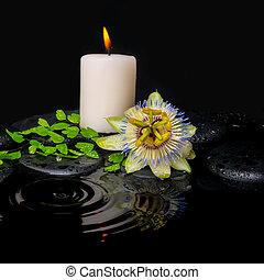 生活, 葉, 低下, シダ, 緑, エステ, 花, まだ, passiflora