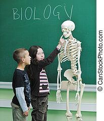 生物学, 学校, 学びなさい