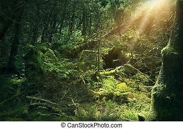 生苔, 木頭, 在, 愛爾蘭