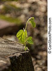 生長, 小, 植物, 傷口, 樹