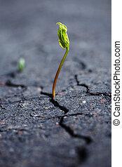 生長, 植物
