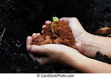 生長, 樹, 在, 手