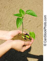 生長, 綠色的植物