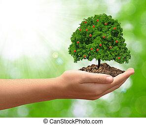 生長, 蘋果樹, 在, 手