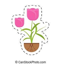 生長, 郁金香, 植物, 花