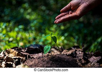 生長, plants., 植物, seedling., 手, 養育, 以及, 上水, 年輕, 嬰孩, 植物, 生長, 在, 萌芽, 序列, 上, 肥沃, 土壤, 由于, 自然, 綠色的背景