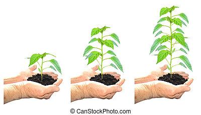 生长, 植物