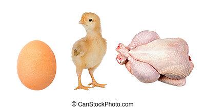 産業, 鶏