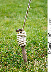用樁撐住, 向上, 繩子, 包裹, 關閉, 帳篷