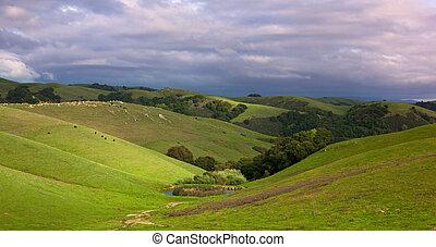 田园诗, 山坡, 带, 牛, 在中, 春天