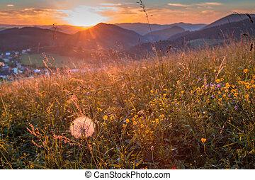 田園, 牧草地, 景色。, 花, フィールド, 前景
