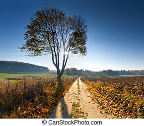田園, 秋, 風景