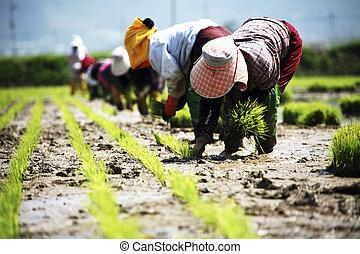 田園, 韓国, 風景, 農夫