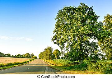 田舎, 大きい, 木, ブリタニー, 農地, france., ∥間に∥, 牧草地, 道, sunset.