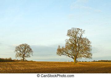 田舎, 日没, 現場, 木
