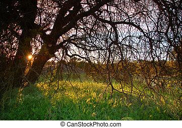 田舎, 春