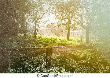 田舎, 木製である, 風景, フェンス