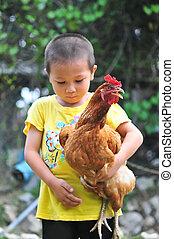 男の子, わずかしか, 彼の, 腕, 届く, 鶏