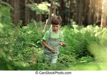 男の子, わずかしか, 森