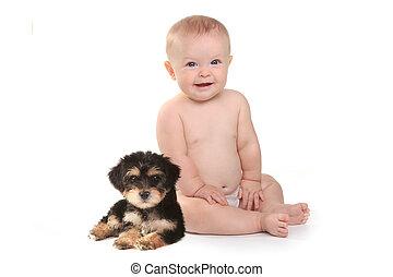男の子, 彼の, ペット, yorkie, ティーカップ, 赤ん坊, 子犬, 愛らしい