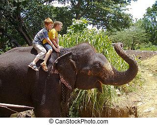 男の子, 背中, 乗馬, 象