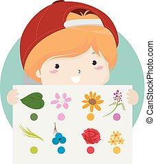男の子, 自然の色, 捜索, イラスト, 子供