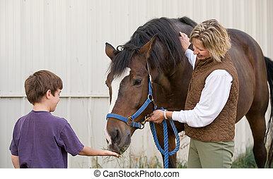 男の子, 馬, 供給