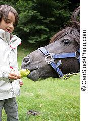 男孩, 很少, 喂养, 马