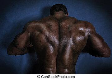 男性, 背中, 筋肉