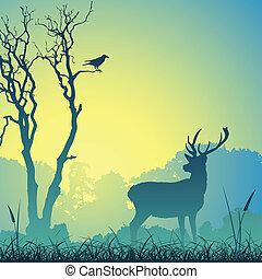 男性, stag, 鹿