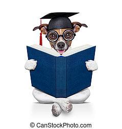 畢業生, 狗
