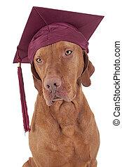畢業, 狗