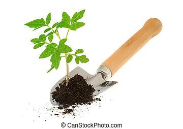 番茄, 花园, 秧苗, 泥刀, 隔离, 白色