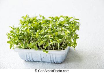 發芽, 水芹, 秧苗, 有机, 花園