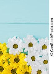 白い、そして黄色の, golden-daisy, 花, composition.