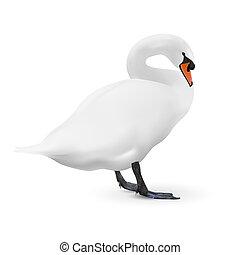 白い白鳥, 隔離された