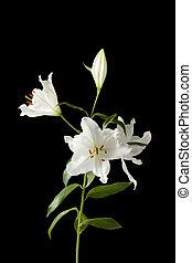 白い花, 上に, 暗い