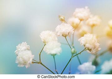 白い花, 上に, 青, バックグラウンド。, 柔らかい, 焦点を合わせなさい。