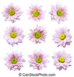 白い花, 背景, コレクション
